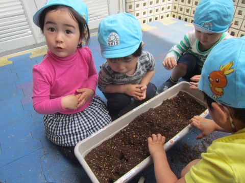 We are planting seeds?